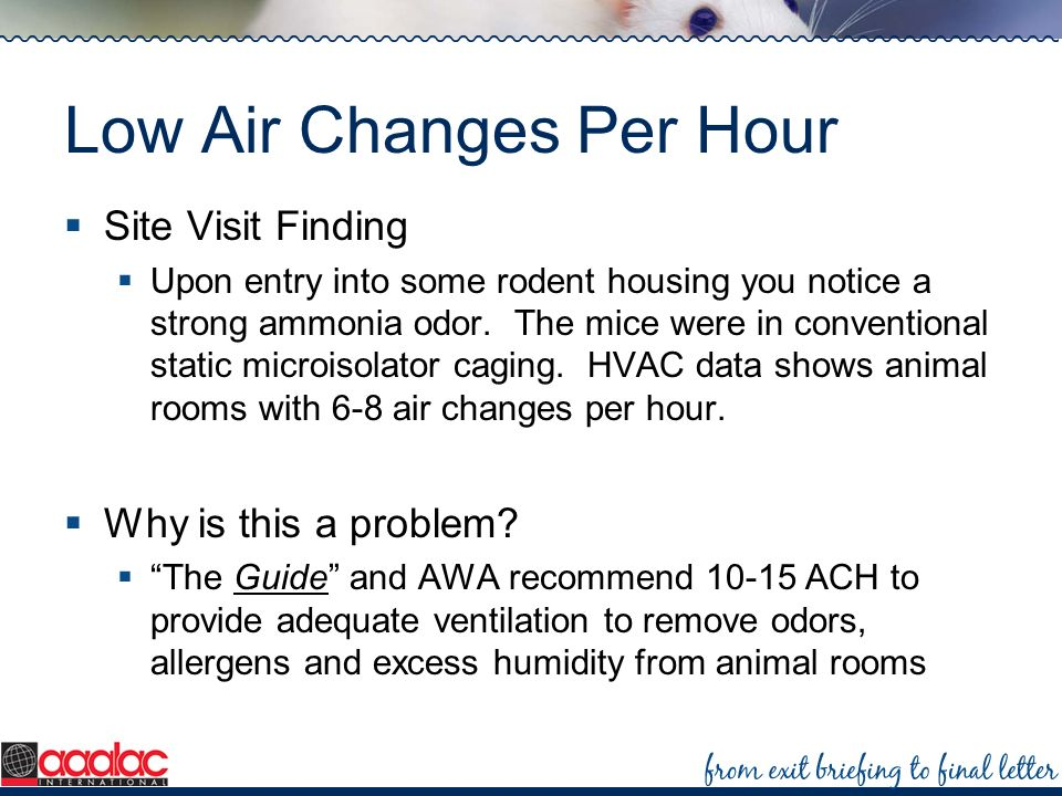 Low Air Changes Per Hour Site Visit Finding Upon entry into some rodent housing you notice a strong ammonia odor. The mice were in conventional static