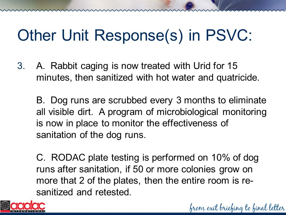 Other Unit Response(s) in PSVC: 3.A. Rabbit caging is now treated with Urid for 15 minutes, then sanitized with hot water and quatricide. B. Dog runs
