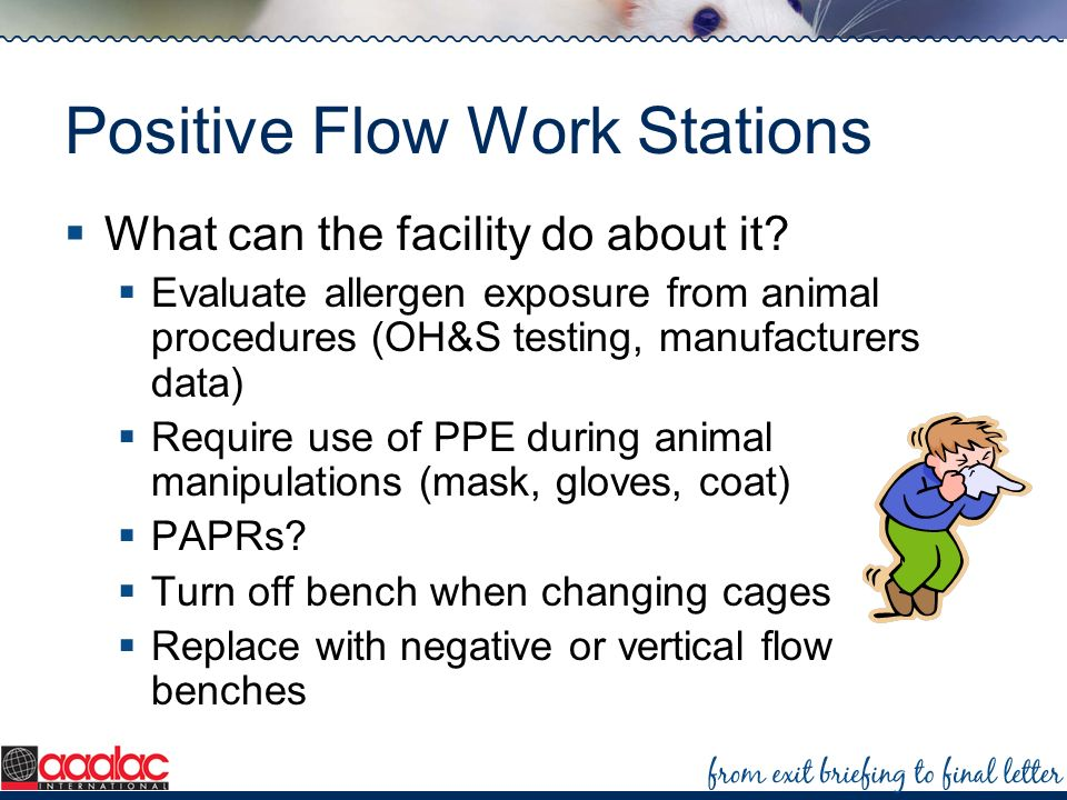 Positive Flow Work Stations What can the facility do about it? Evaluate allergen exposure from animal procedures (OH&S testing, manufacturers data) Re