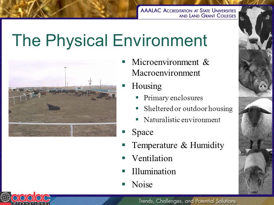 The Physical Environment Microenvironment & Macroenvironment Housing Primary enclosures Sheltered or outdoor housing Naturalistic environment Space Te