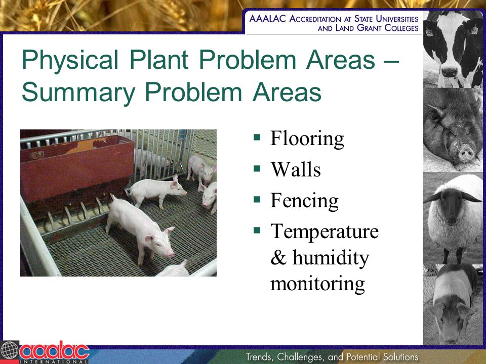Physical Plant Problem Areas – Summary Problem Areas Flooring Walls Fencing Temperature & humidity monitoring