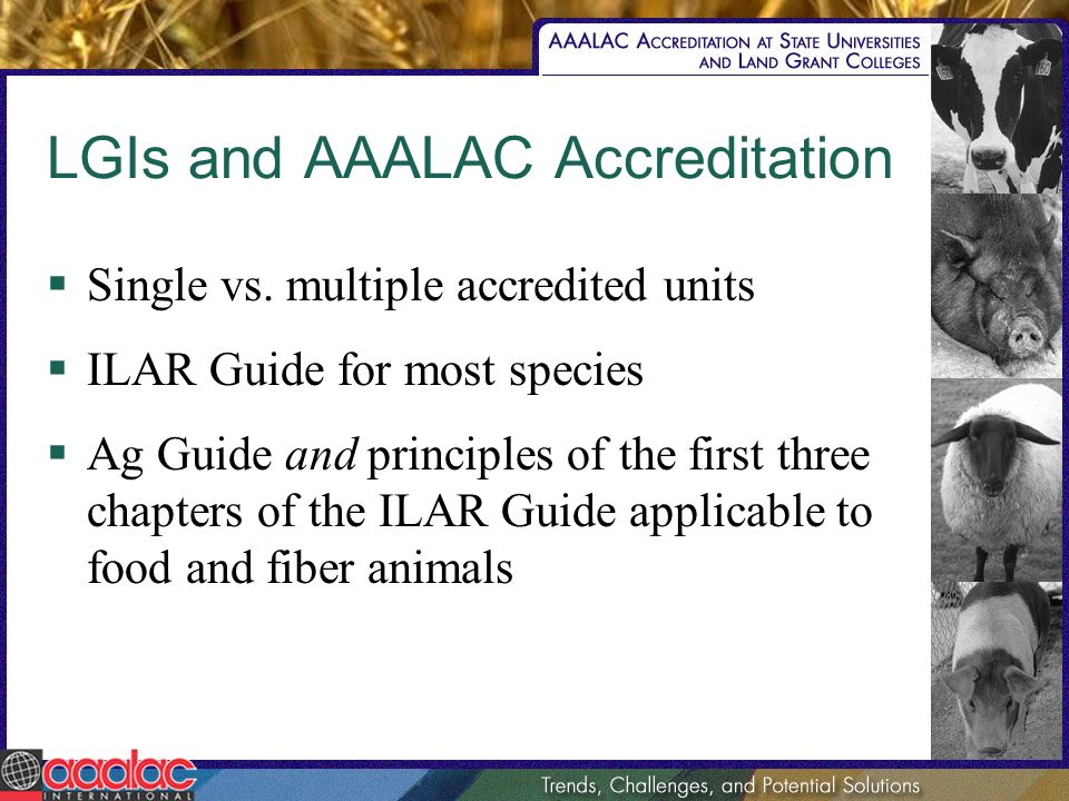LGIs and AAALAC Accreditation Single vs. multiple accredited units ILAR Guide for most species Ag Guide and principles of the first three chapters of