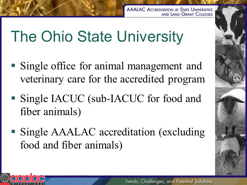 The Ohio State University Single office for animal management and veterinary care for the accredited program Single IACUC (sub-IACUC for food and fiber animals) Single AAALAC accreditation (excluding food and fiber animals)
