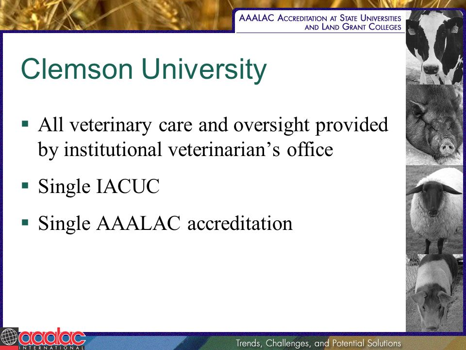 Clemson University All veterinary care and oversight provided by institutional veterinarians office Single IACUC Single AAALAC accreditation
