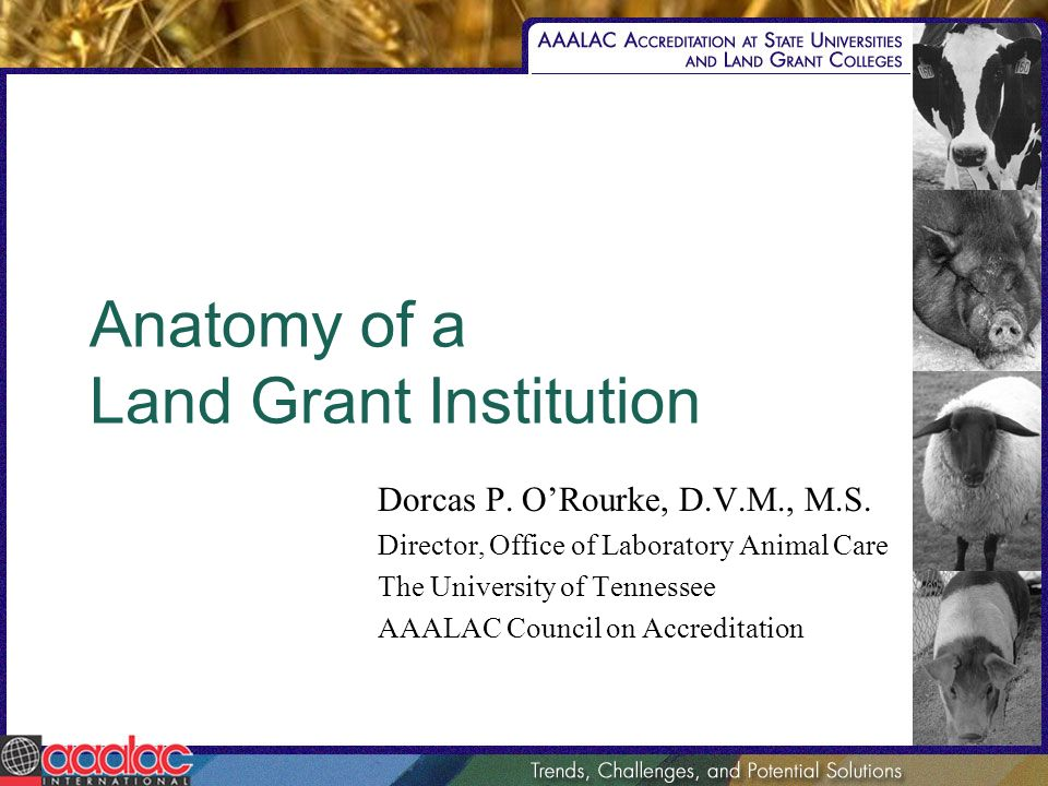 Anatomy of a Land Grant Institution Dorcas P. ORourke, D.V.M., M.S.