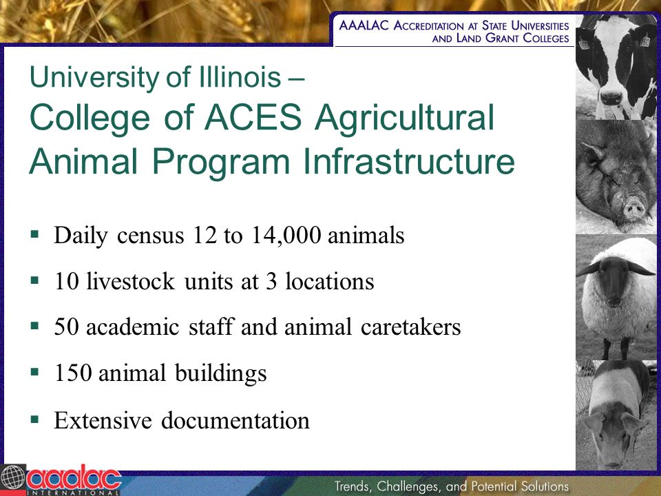 University of Illinois – College of ACES Agricultural Animal Program Infrastructure Daily census 12 to 14,000 animals 10 livestock units at 3 locations 50 academic staff and animal caretakers 150 animal buildings Extensive documentation