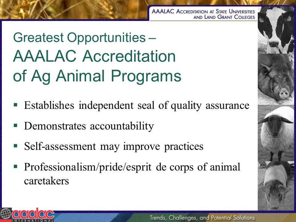 Greatest Opportunities – AAALAC Accreditation of Ag Animal Programs Establishes independent seal of quality assurance Demonstrates accountability Self-assessment may improve practices Professionalism/pride/esprit de corps of animal caretakers