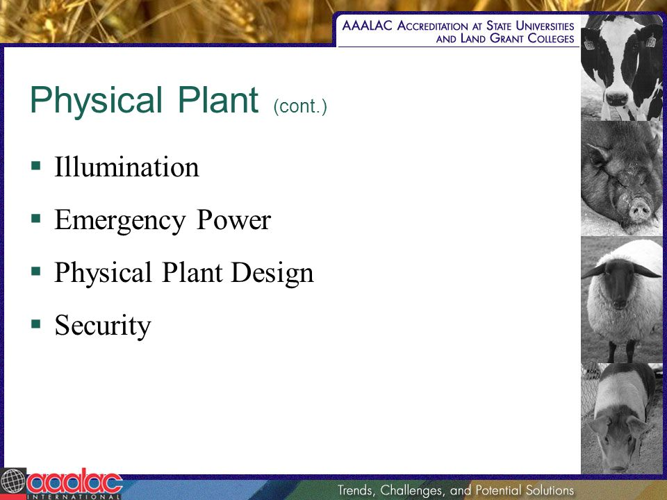 Physical Plant (cont.) Illumination Emergency Power Physical Plant Design Security