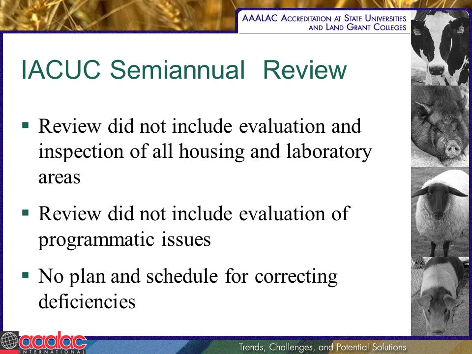 IACUC Semiannual Review Review did not include evaluation and inspection of all housing and laboratory areas Review did not include evaluation of programmatic issues No plan and schedule for correcting deficiencies