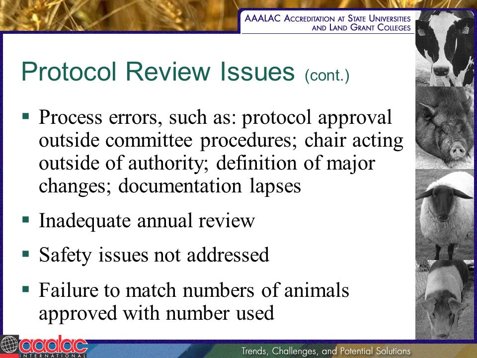 Protocol Review Issues (cont.) Process errors, such as: protocol approval outside committee procedures; chair acting outside of authority; definition