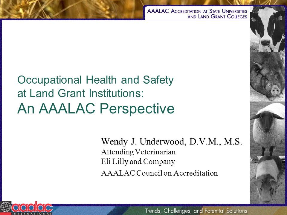 Occupational Health and Safety at Land Grant Institutions: An AAALAC Perspective Wendy J. Underwood, D.V.M., M.S. Attending Veterinarian Eli Lilly and