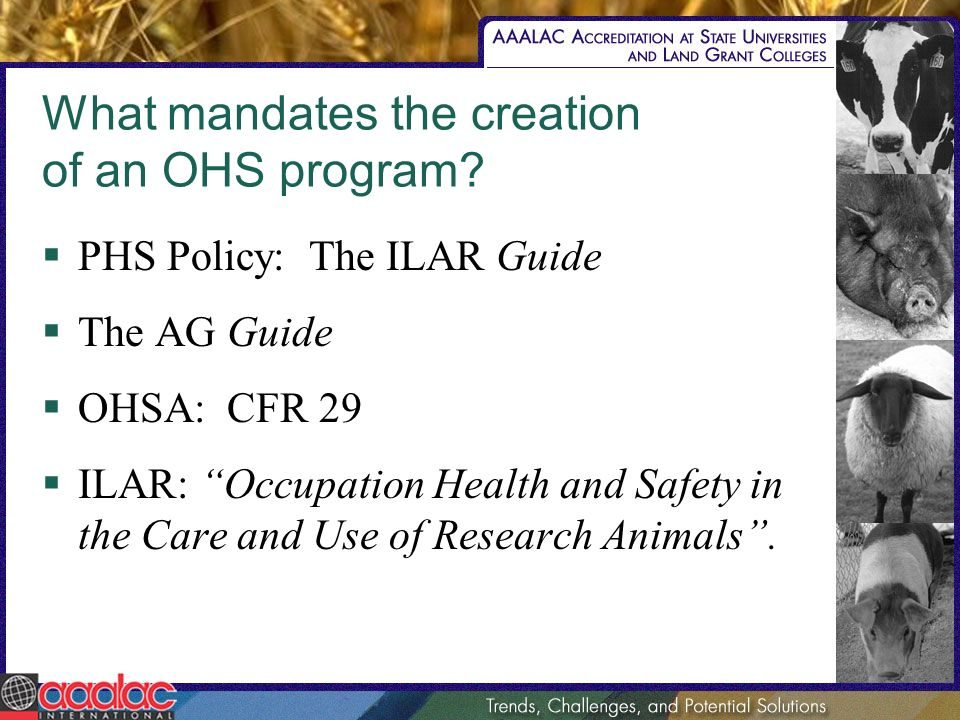 What mandates the creation of an OHS program? PHS Policy: The ILAR Guide The AG Guide OHSA: CFR 29 ILAR: Occupation Health and Safety in the Care and