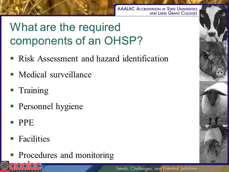 What are the required components of an OHSP? Risk Assessment and hazard identification Medical surveillance Training Personnel hygiene PPE Facilities