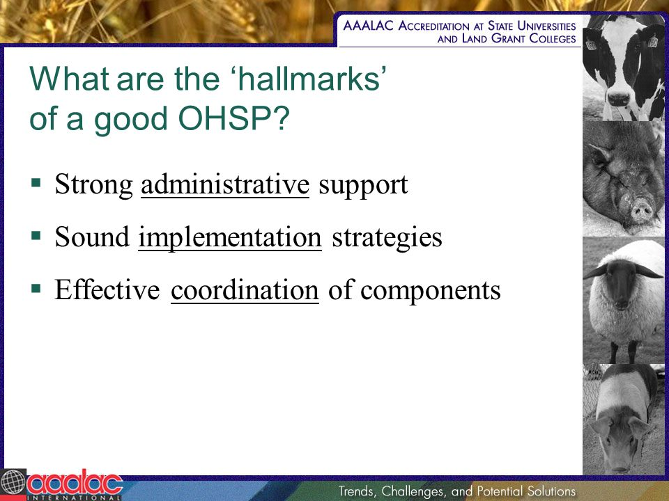 What are the hallmarks of a good OHSP.