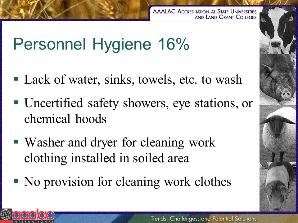 Personnel Hygiene 16% Lack of water, sinks, towels, etc. to wash Uncertified safety showers, eye stations, or chemical hoods Washer and dryer for clea