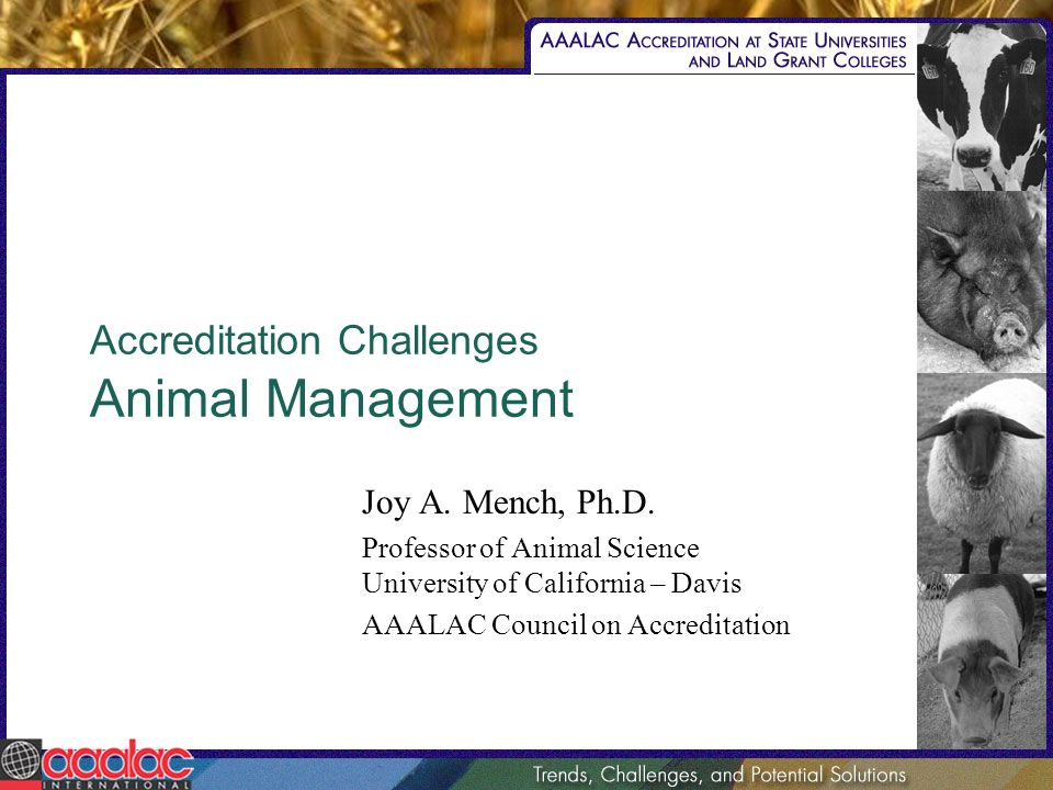 Accreditation Challenges Animal Management Joy A. Mench, Ph.D.