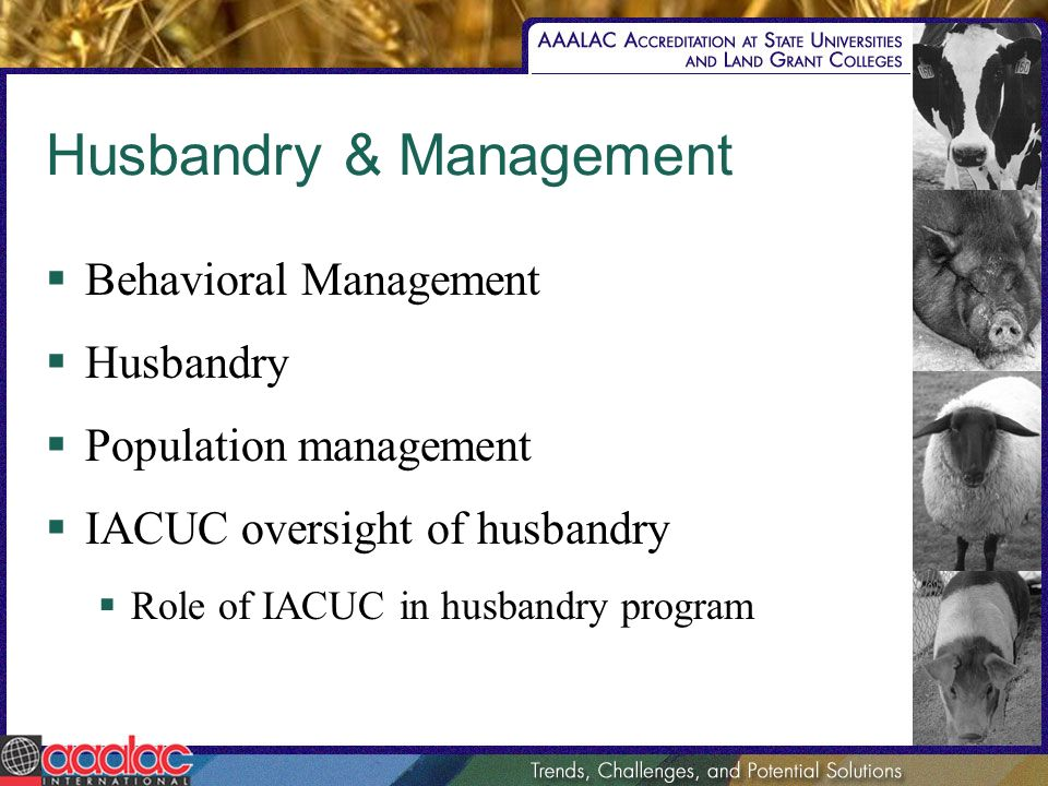 Husbandry & Management Behavioral Management Husbandry Population management IACUC oversight of husbandry Role of IACUC in husbandry program