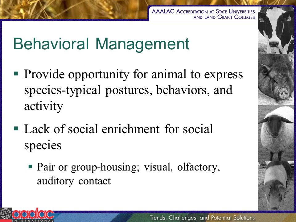 Behavioral Management Provide opportunity for animal to express species-typical postures, behaviors, and activity Lack of social enrichment for social species Pair or group-housing; visual, olfactory, auditory contact