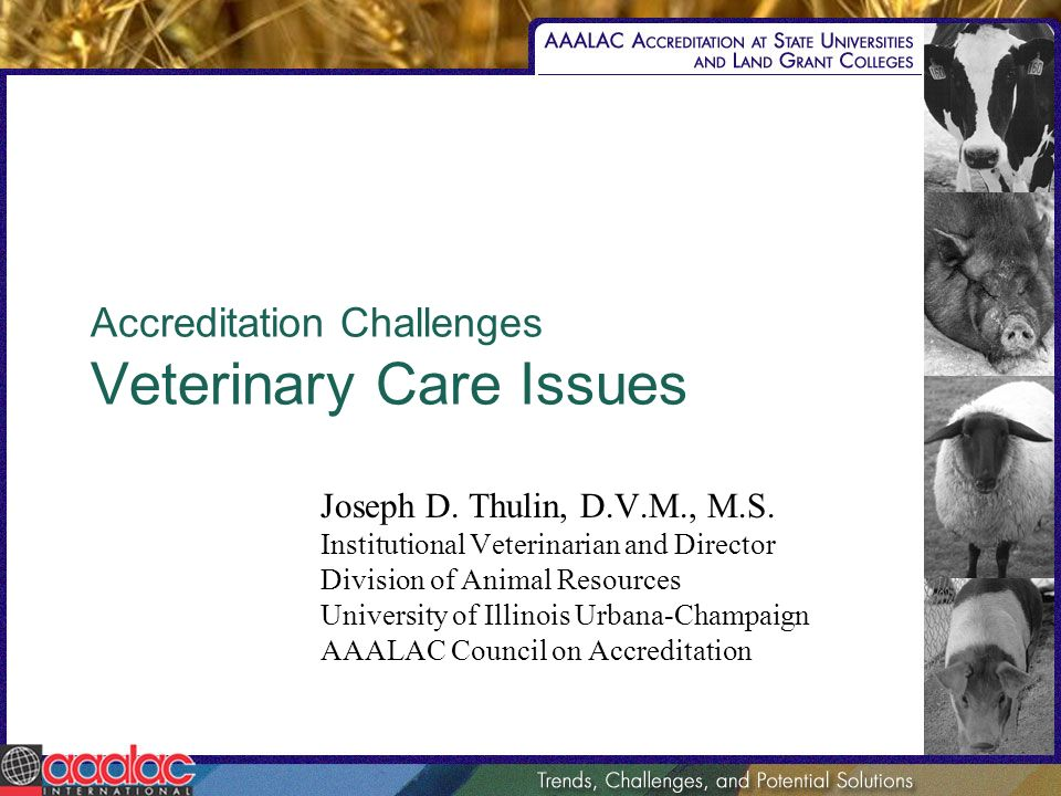 Accreditation Challenges Veterinary Care Issues Joseph D. Thulin, D.V.M., M.S. Institutional Veterinarian and Director Division of Animal Resources Un