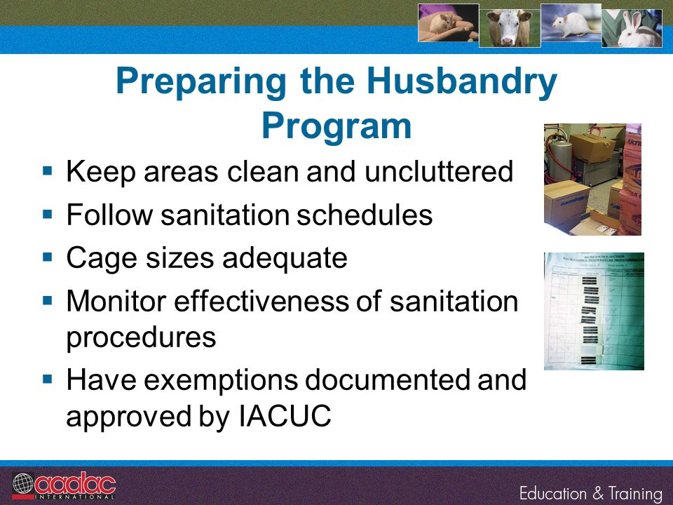 Preparing the Husbandry Program Keep areas clean and uncluttered Follow sanitation schedules Cage sizes adequate Monitor effectiveness of sanitation p