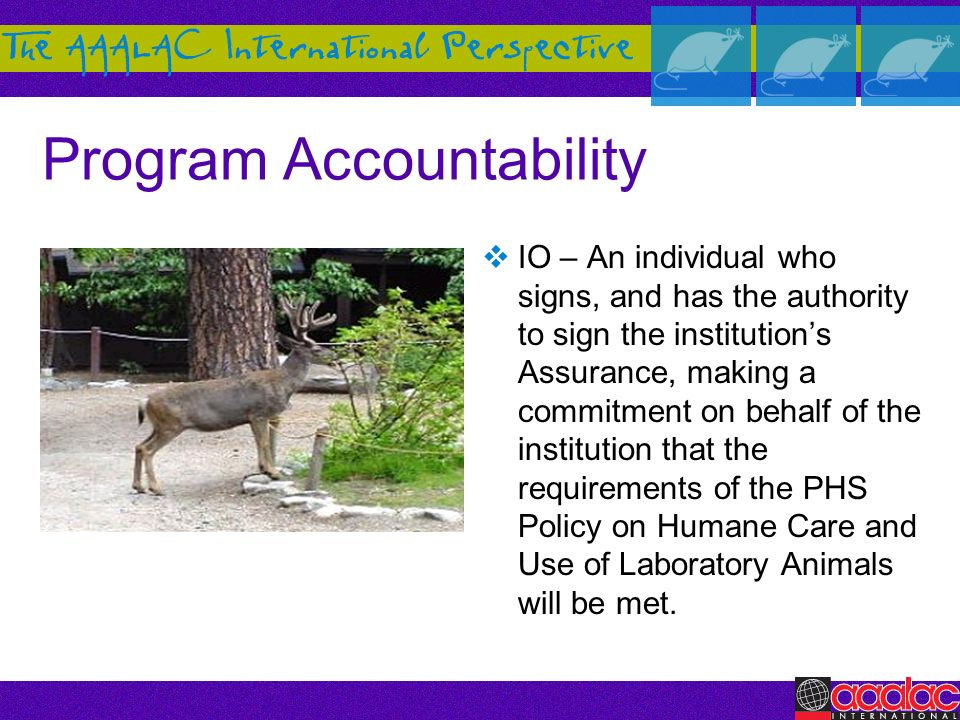 Program Accountability IO – An individual who signs, and has the authority to sign the institutions Assurance, making a commitment on behalf of the in