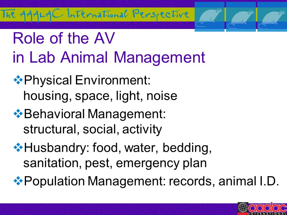 Role of the AV in Lab Animal Management Physical Environment: housing, space, light, noise Behavioral Management: structural, social, activity Husband