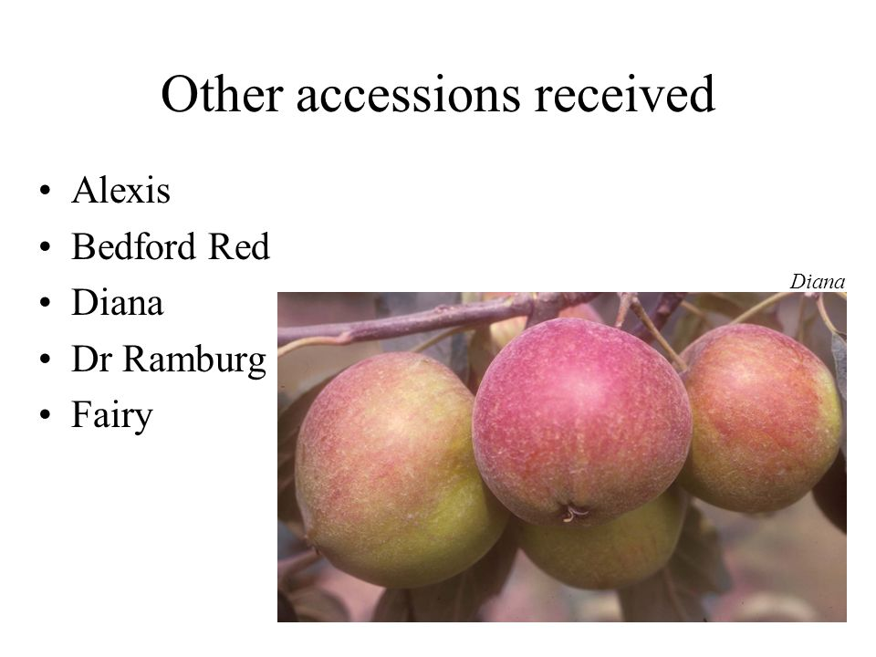 Other accessions received Alexis Bedford Red Diana Dr Ramburg Fairy Diana