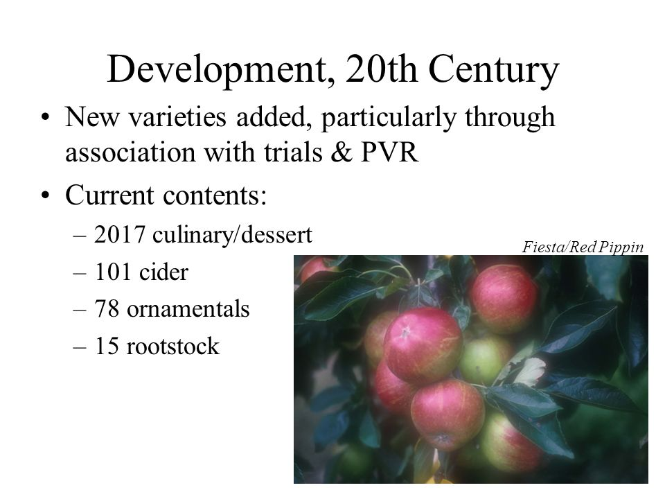 Development, 20th Century New varieties added, particularly through association with trials & PVR Current contents: –2017 culinary/dessert –101 cider