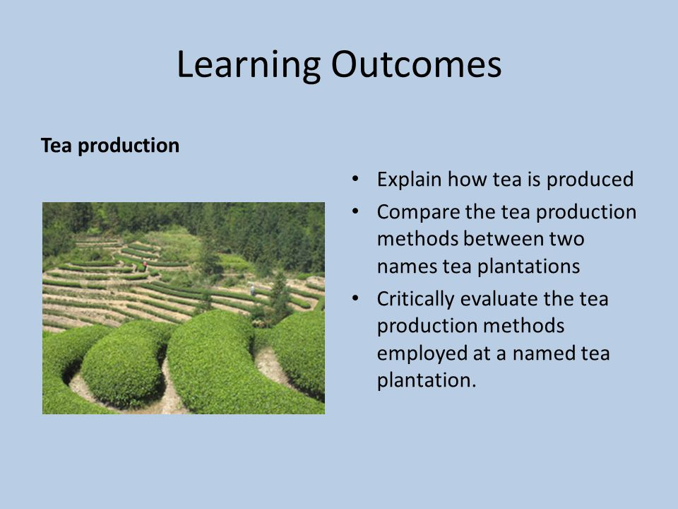 Learning Outcomes Tea production Explain how tea is produced Compare the tea production methods between two names tea plantations Critically evaluate the tea production methods employed at a named tea plantation.