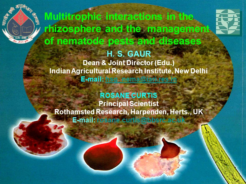 H. S. GAUR Dean & Joint Director (Edu.) Indian Agricultural Research Institute, New Delhi E-mail: hsg_nema@iari.res.inhsg_nema@iari.res.in ROSANE CURT
