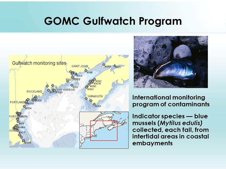 GOMC Gulfwatch Program International monitoring program of contaminants Indicator species blue mussels ( Mytilus edulis) collected, each fall, from intertidal areas in coastal embayments