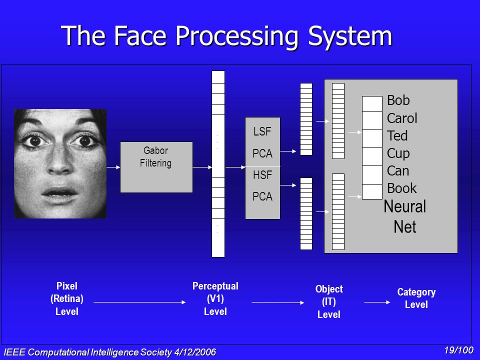 IEEE Computational Intelligence Society 4/12/2006 18/100 The Face Processing System PCA............ Gabor Filtering Bob Carol Ted Cup Can Book Neural