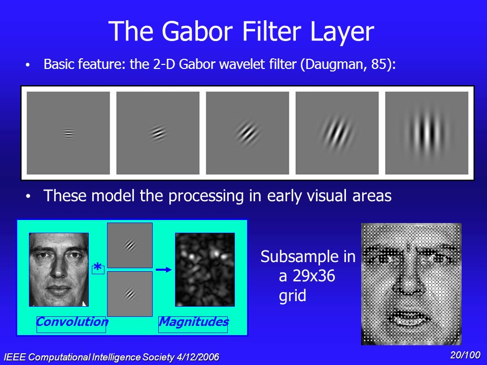 IEEE Computational Intelligence Society 4/12/2006 19/100 The Face Processing System LSF PCA HSF PCA............ Gabor Filtering Bob Carol Ted Cup Can