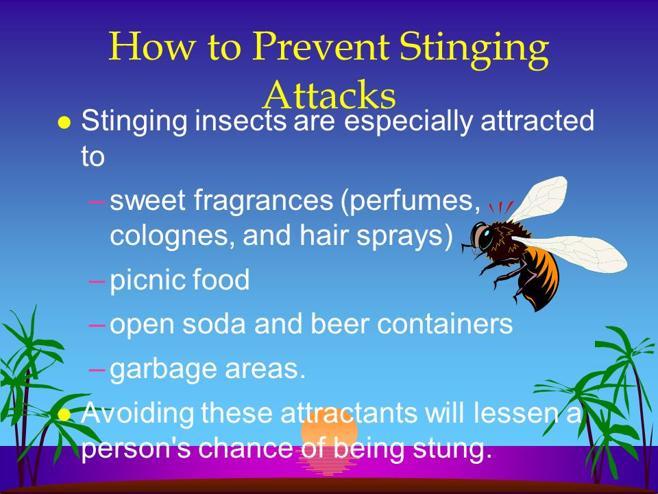 How to Prevent Stinging Attacks l Stinging insects are especially attracted to –sweet fragrances (perfumes, colognes, and hair sprays) –picnic food –o