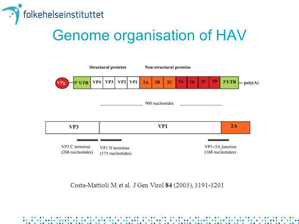 Genome organisation of HAV Costa-Mattioli M et al. J Gen Virol 84 (2003), 3191-3201