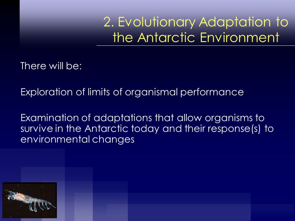 2. Evolutionary Adaptation to the Antarctic Environment There will be: Exploration of limits of organismal performance Examination of adaptations that