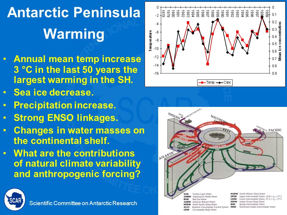 Scientific Committee on Antarctic Research Antarctic Peninsula Warming Annual mean temp increase 3 °C in the last 50 years the largest warming in the SH.