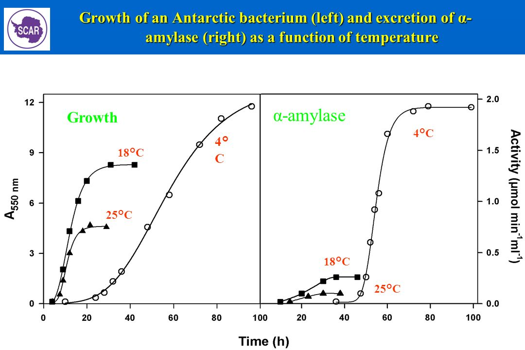 Growth of an Antarctic bacterium (left) and excretion of α- amylase (right) as a function of temperature Growth of an Antarctic bacterium (left) and e