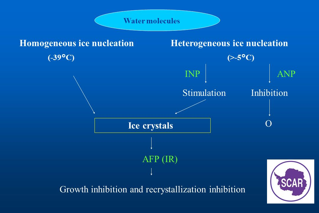 Water molecules Homogeneous ice nucleation (-39°C) Heterogeneous ice nucleation (>-5°C) INPANP StimulationInhibition Ice crystals O AFP (IR) Growth in