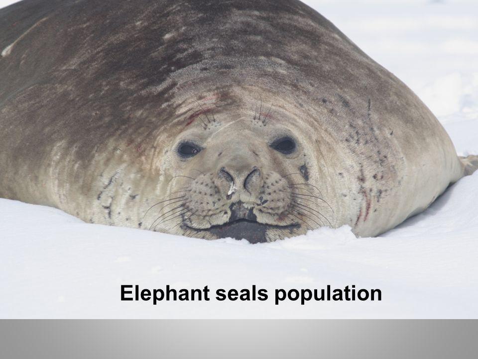 Elephant seals population