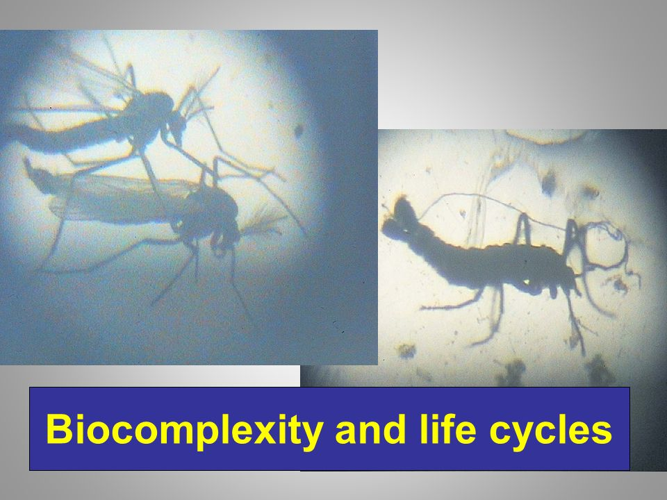 Biocomplexity and life cycles