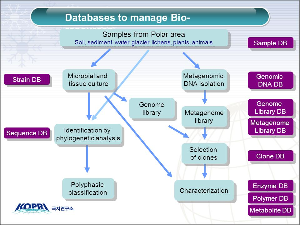 Databases to manage Bio- resources Samples from Polar area Soil, sediment, water, glacier, lichens, plants, animals Samples from Polar area Soil, sedi