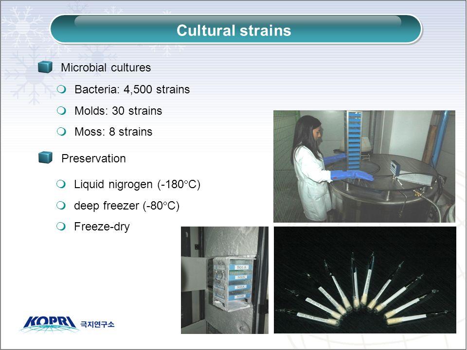 Cultural strains Bacteria: 4,500 strains Molds: 30 strains Moss: 8 strains Microbial cultures Preservation Liquid nigrogen (-180 C) deep freezer (-80 C) Freeze-dry
