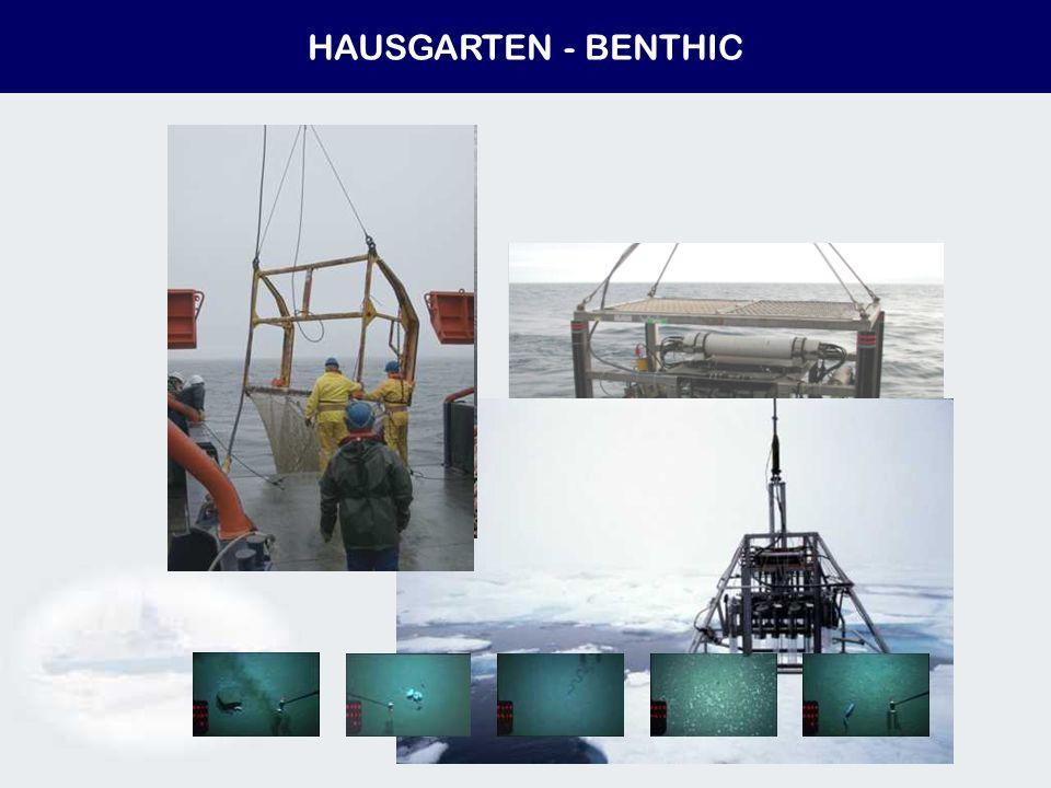 HAUSGARTEN - BENTHIC