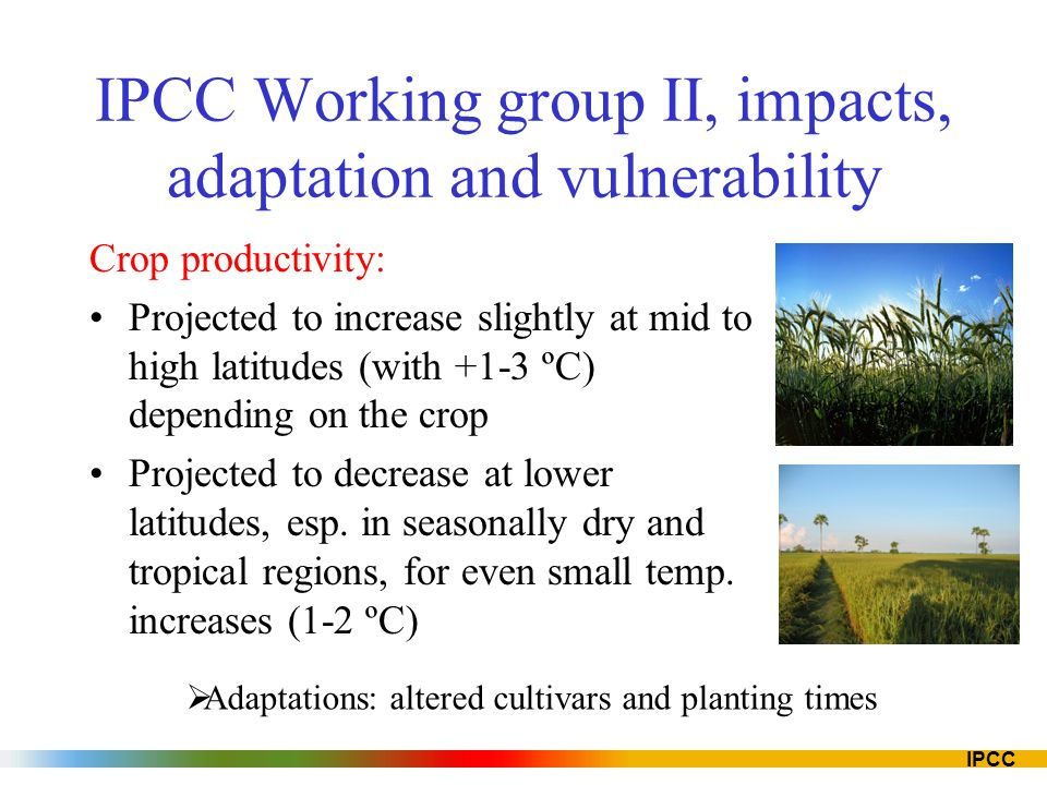 IPCC IPCC Working group II, impacts, adaptation and vulnerability Crop productivity: Projected to increase slightly at mid to high latitudes (with +1-3 ºC) depending on the crop Projected to decrease at lower latitudes, esp.