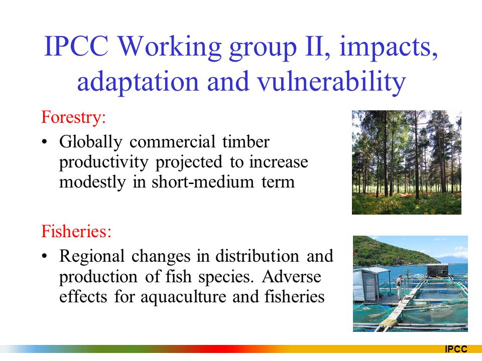 IPCC IPCC Working group II, impacts, adaptation and vulnerability Forestry: Globally commercial timber productivity projected to increase modestly in