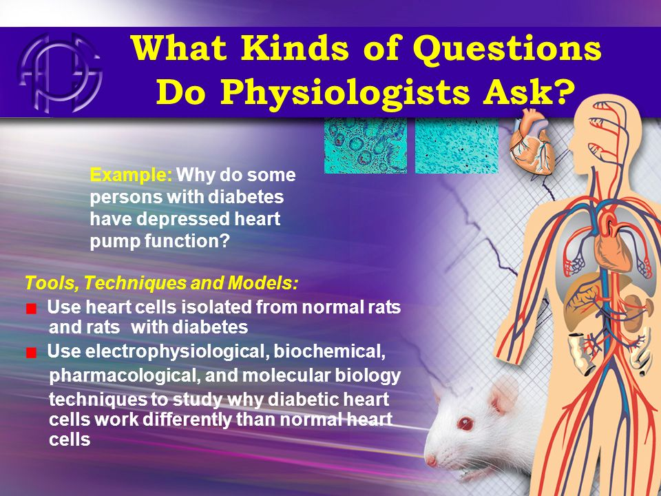 What Kinds of Questions Do Physiologists Ask? Tools, Techniques and Models: Use heart cells isolated from normal rats and rats with diabetes Use elect
