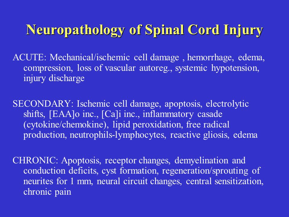 Neuropathology of Spinal Cord Injury ACUTE: Mechanical/ischemic cell damage, hemorrhage, edema, compression, loss of vascular autoreg., systemic hypotension, injury discharge SECONDARY: Ischemic cell damage, apoptosis, electrolytic shifts, [EAA]o inc., [Ca]i inc., inflammatory casade (cytokine/chemokine), lipid peroxidation, free radical production, neutrophils-lymphocytes, reactive gliosis, edema CHRONIC: Apoptosis, receptor changes, demyelination and conduction deficits, cyst formation, regeneration/sprouting of neurites for 1 mm, neural circuit changes, central sensitization, chronic pain