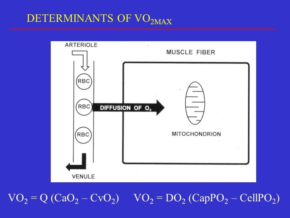 VO 2 = Q (CaO 2 – CvO 2 )VO 2 = DO 2 (CapPO 2 – CellPO 2 ) DETERMINANTS OF VO 2MAX