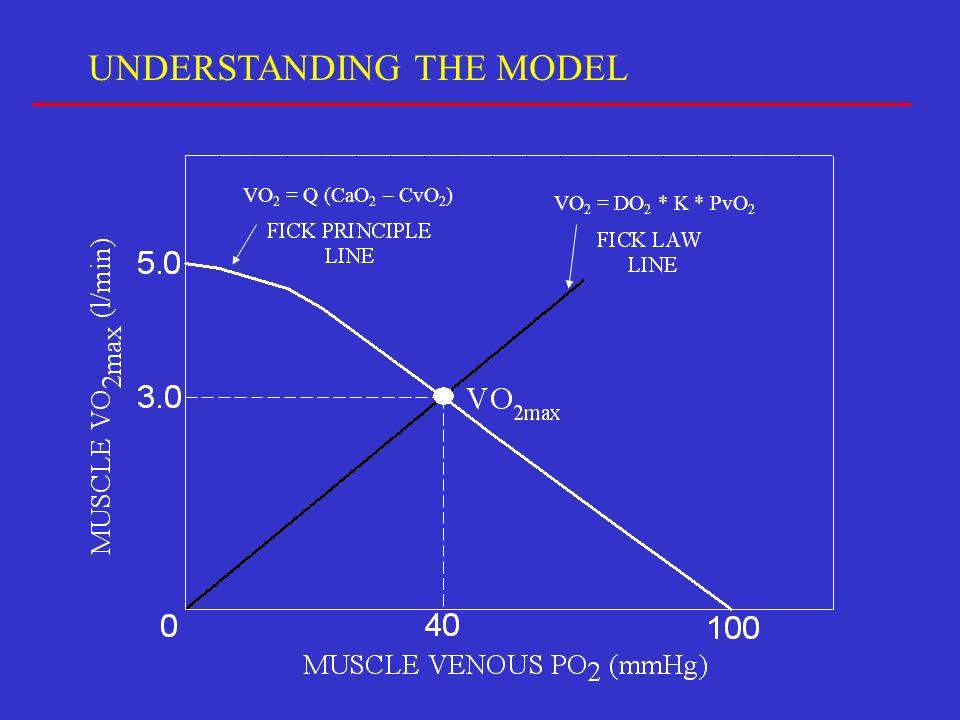 UNDERSTANDING THE MODEL VO 2 = Q (CaO 2 – CvO 2 ) VO 2 = DO 2 * K * PvO 2